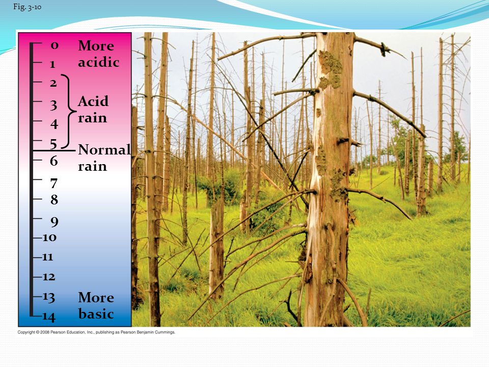 More acidic 1 2 3 Acid rain Acid rain 4 5 Normal rain 6 7 8 9 10 11 12