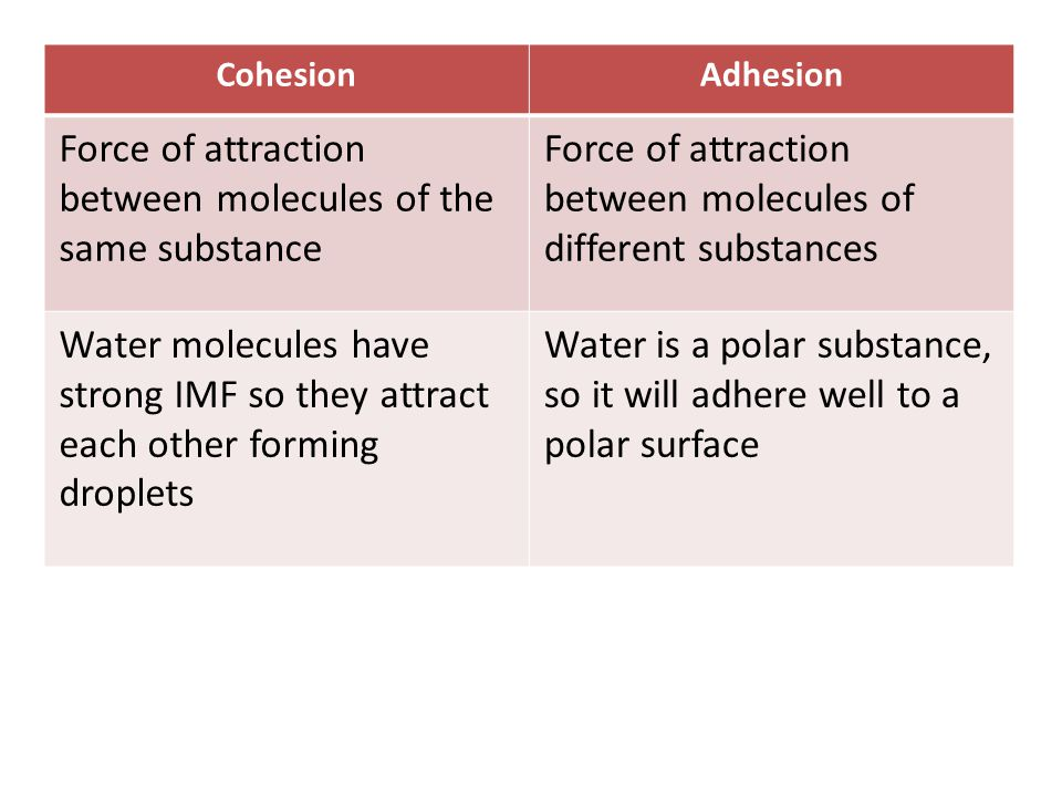 Force of attraction between molecules of the same substance