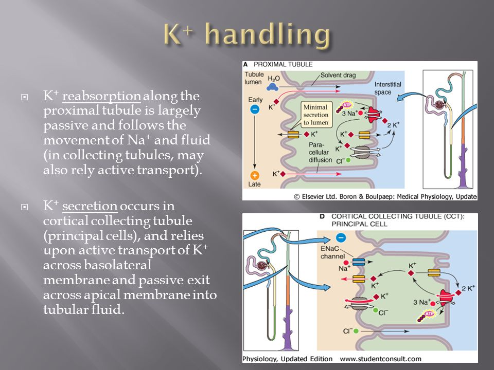 K+ handling