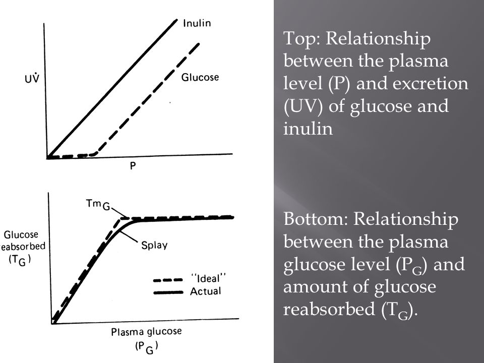 Top: Relationship between the plasma level (P) and excretion (UV) of glucose and inulin