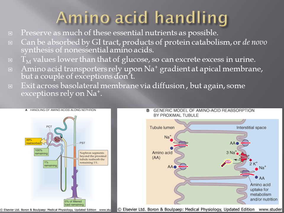Amino acid handling Preserve as much of these essential nutrients as possible.