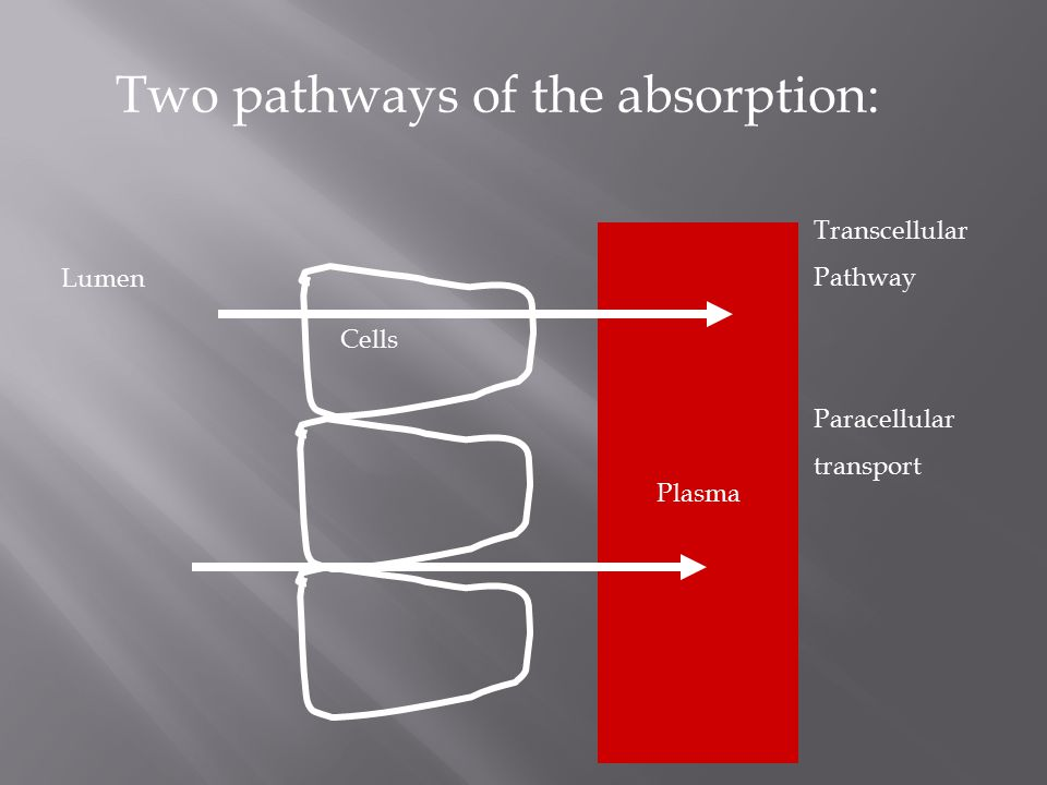 Two pathways of the absorption: