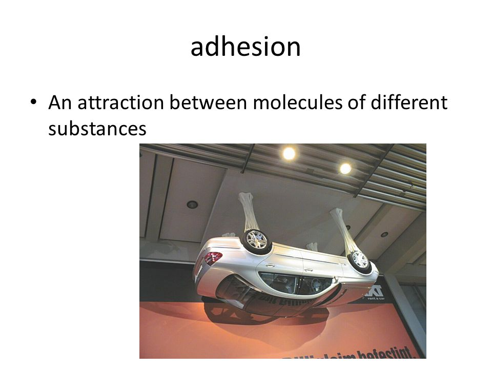 adhesion An attraction between molecules of different substances
