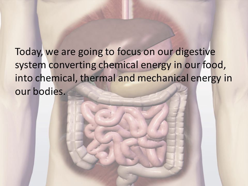 Today, we are going to focus on our digestive system converting chemical energy in our food, into chemical, thermal and mechanical energy in our bodies.