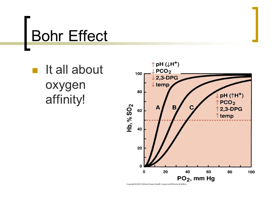 Bohr Effect It all about oxygen affinity!