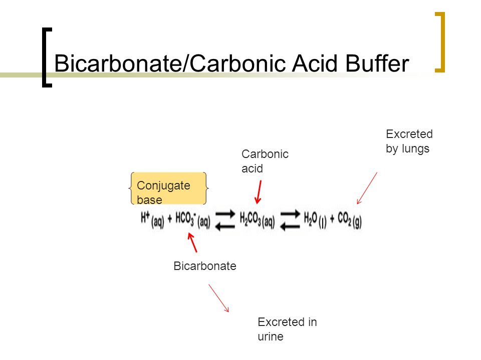 Bicarbonate/Carbonic Acid Buffer