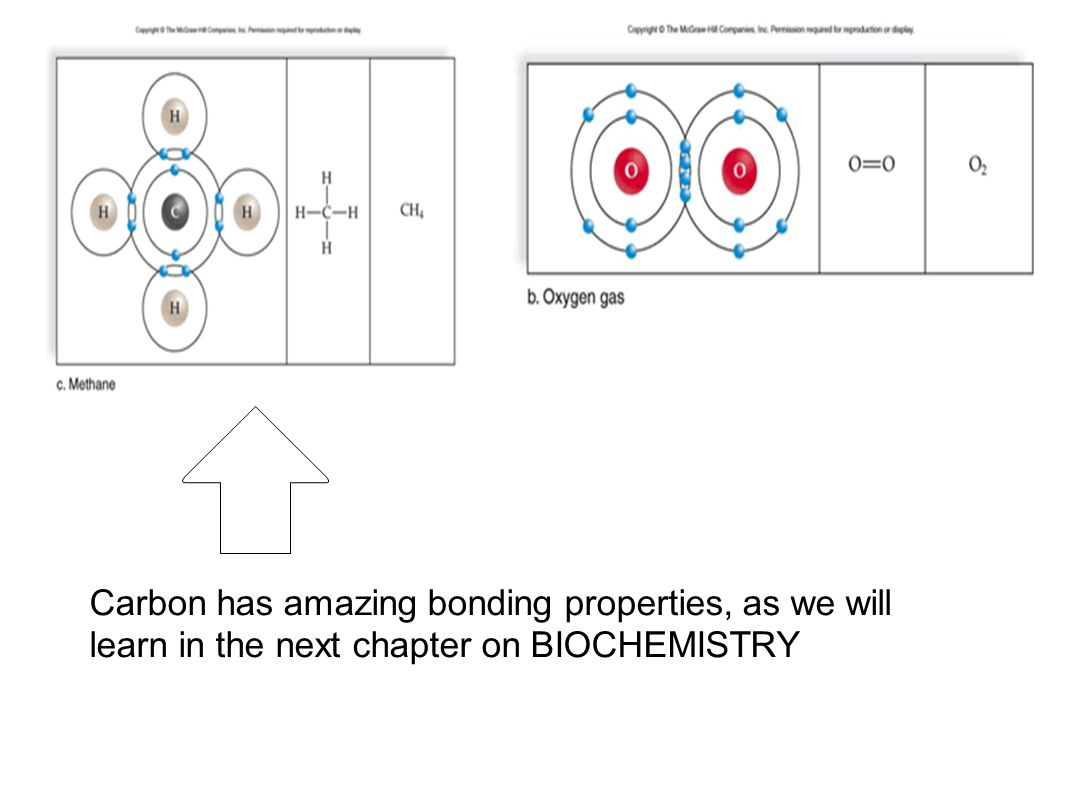 Carbon has amazing bonding properties, as we will learn in the next chapter on BIOCHEMISTRY