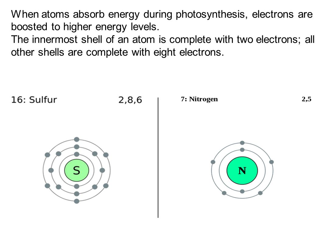 When atoms absorb energy during photosynthesis, electrons are boosted to higher energy levels.