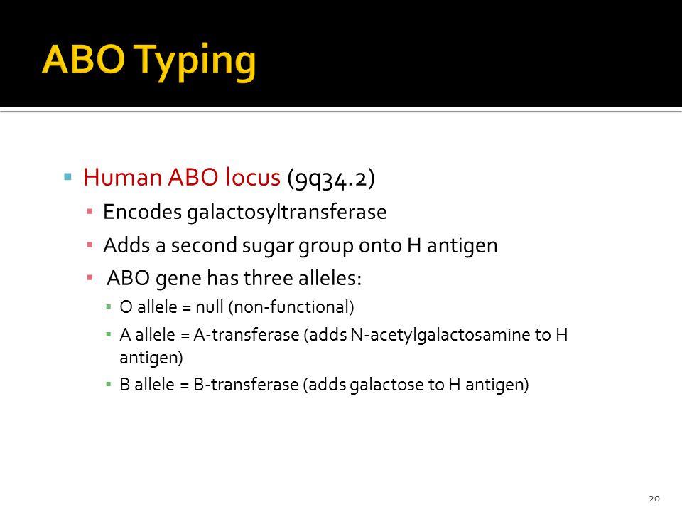 ABO Typing Human ABO locus (9q34.2) Encodes galactosyltransferase