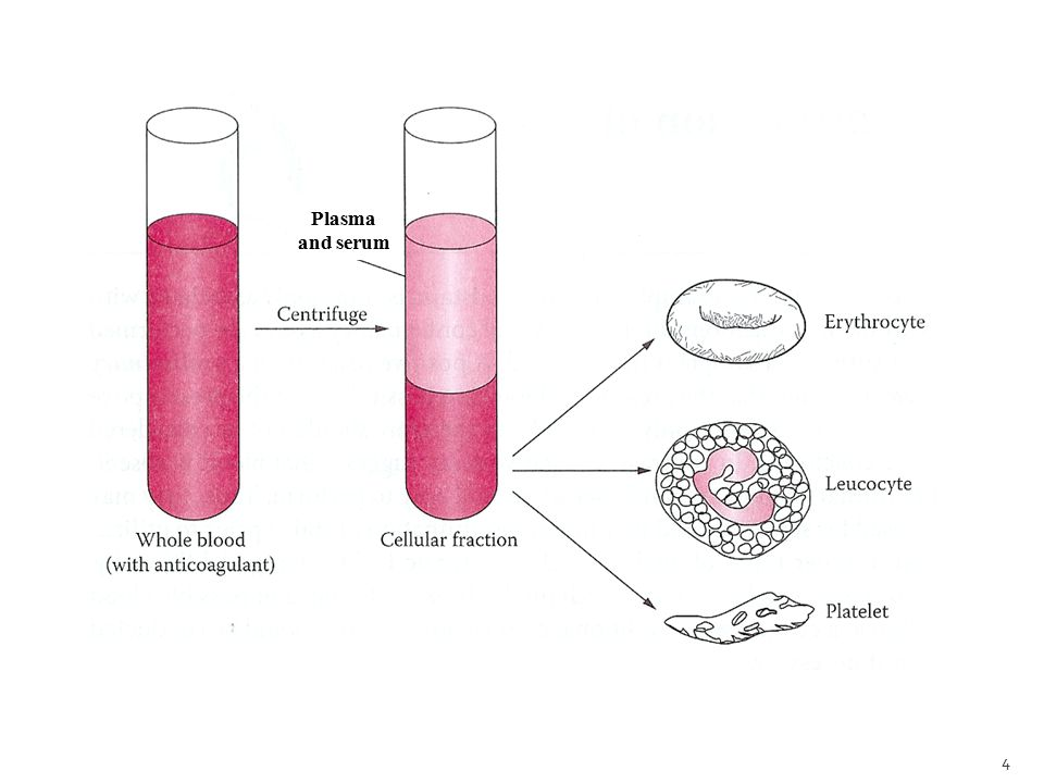 Plasma and serum