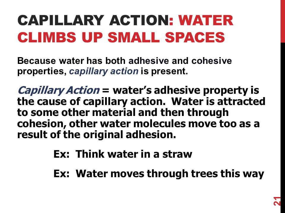 Capillary action: water climbs up small spaces