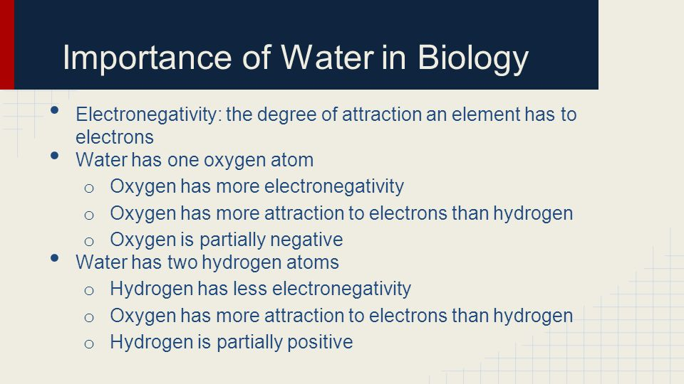 Importance of Water in Biology