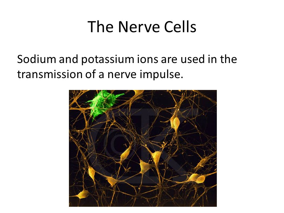 The Nerve Cells Sodium and potassium ions are used in the transmission of a nerve impulse.