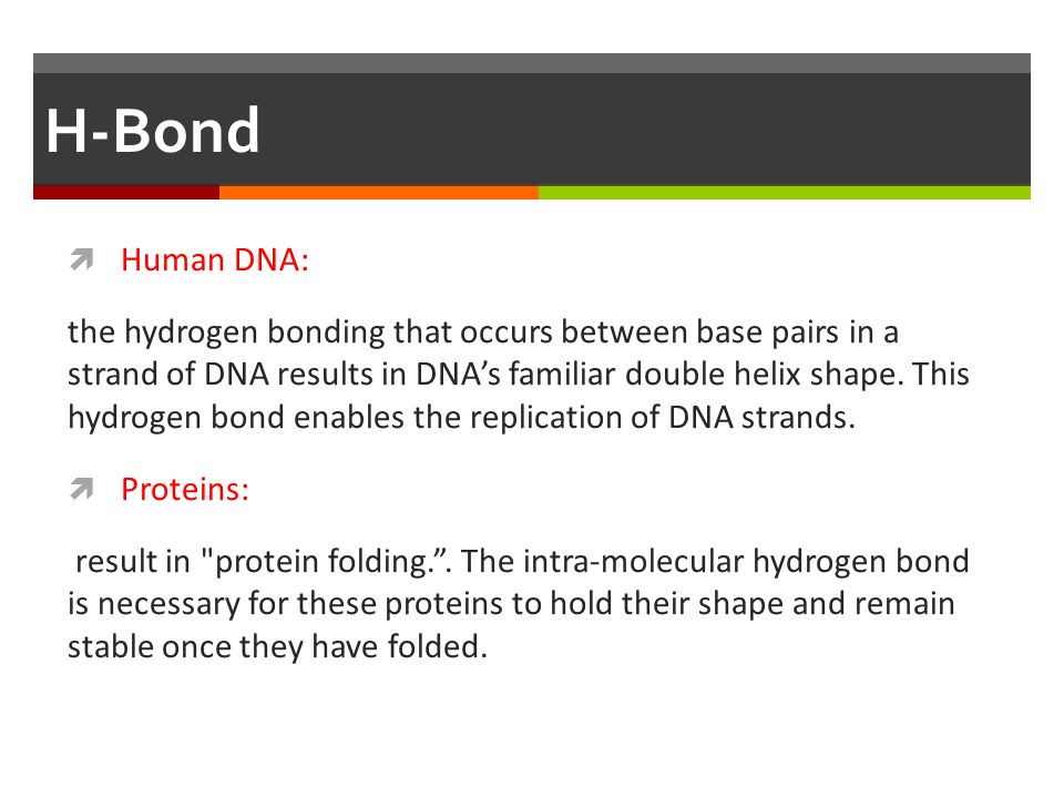 H-Bond Human DNA: