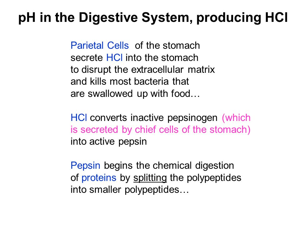 pH in the Digestive System, producing HCl