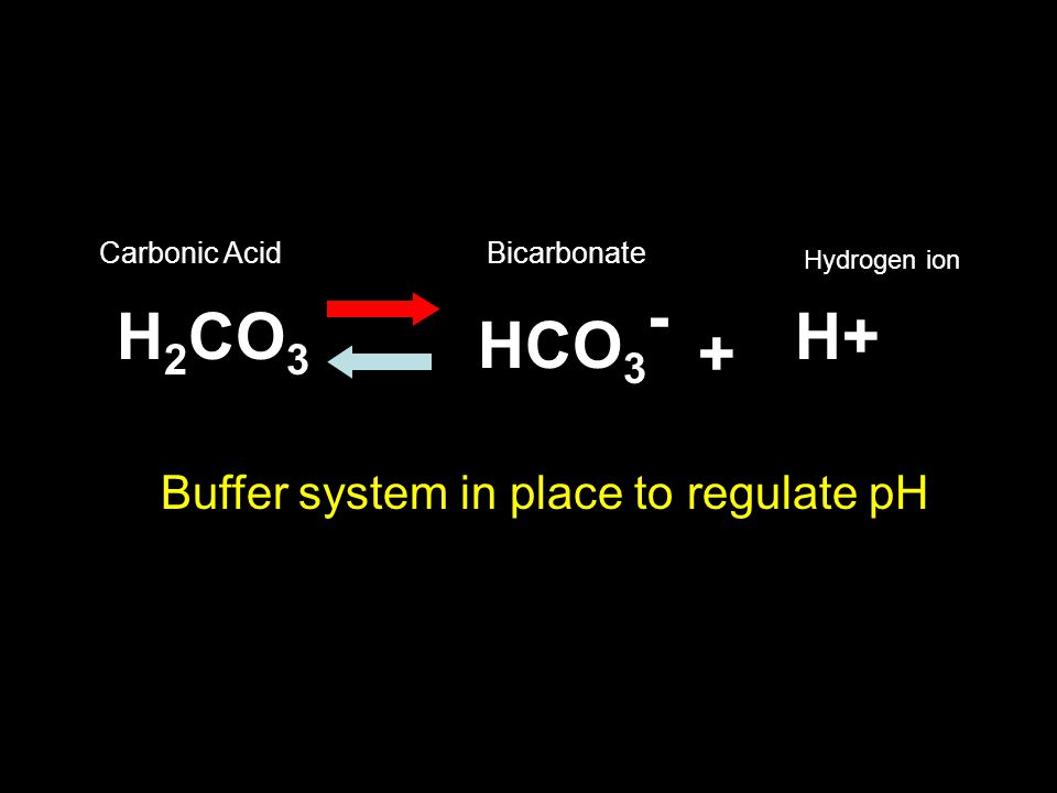 H2CO3 H+ HCO3- + Buffer system in place to regulate pH Carbonic Acid