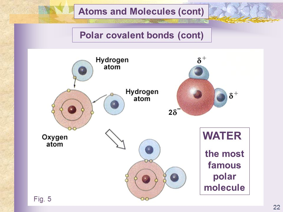 WATER Atoms and Molecules (cont) Polar covalent bonds (cont)
