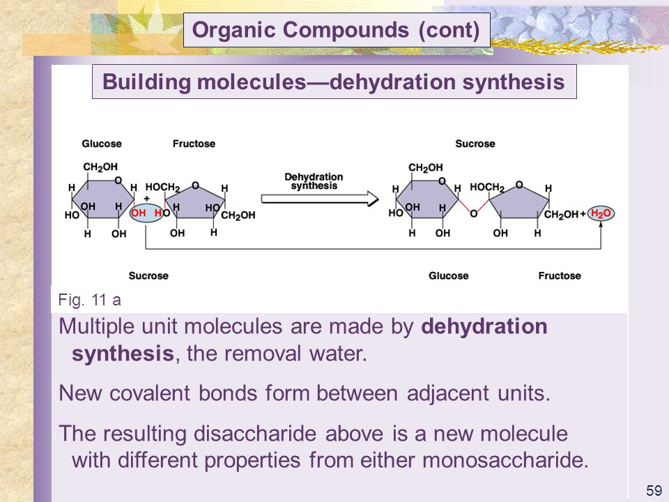 Organic Compounds (cont) Building molecules—dehydration synthesis