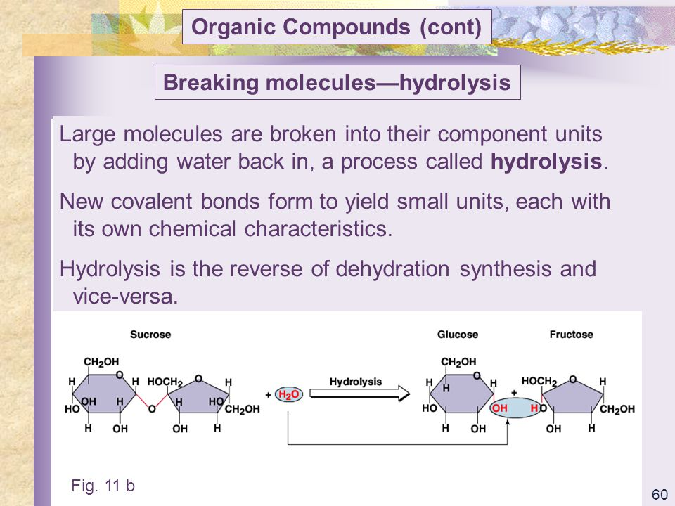 Organic Compounds (cont) Breaking molecules—hydrolysis