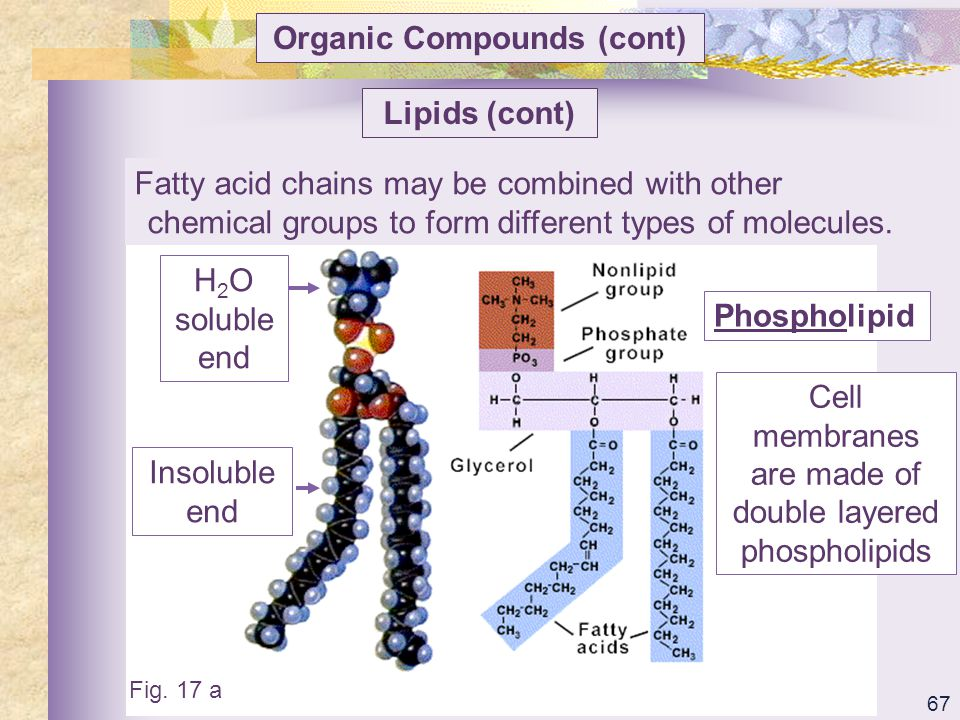 Organic Compounds (cont)