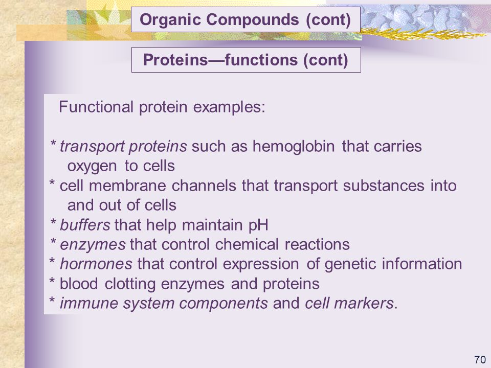 Organic Compounds (cont) Proteins—functions (cont)