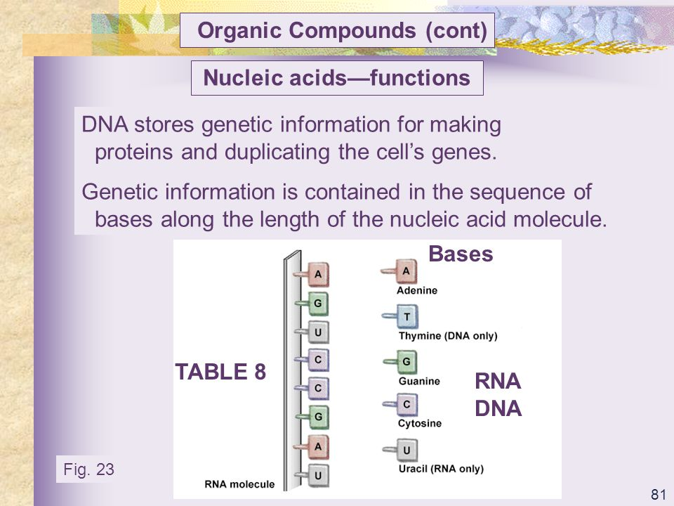 Nucleic acids—functions