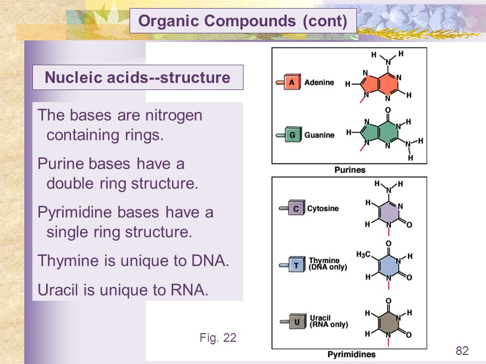 Organic Compounds (cont) Nucleic acids--structure
