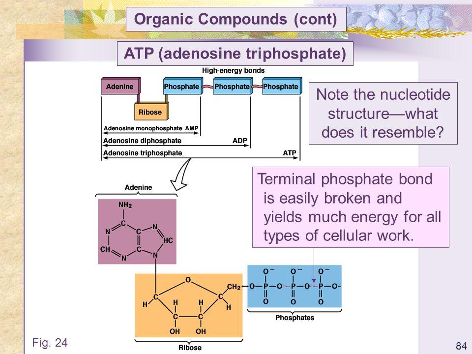 Organic Compounds (cont) ATP (adenosine triphosphate)