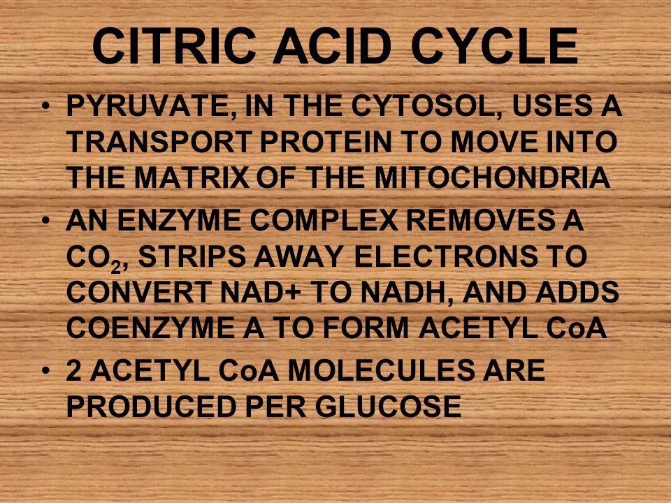 CITRIC ACID CYCLE PYRUVATE, IN THE CYTOSOL, USES A TRANSPORT PROTEIN TO MOVE INTO THE MATRIX OF THE MITOCHONDRIA.