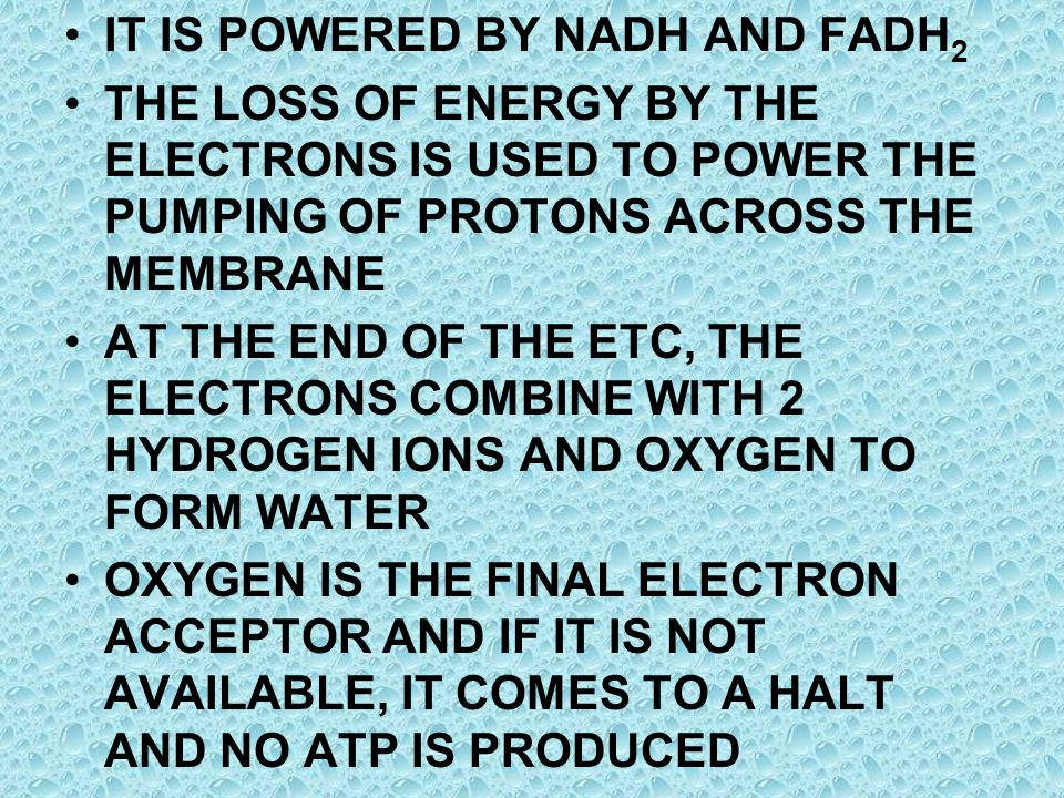 IT IS POWERED BY NADH AND FADH2