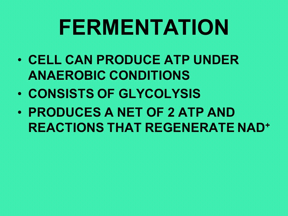 FERMENTATION CELL CAN PRODUCE ATP UNDER ANAEROBIC CONDITIONS
