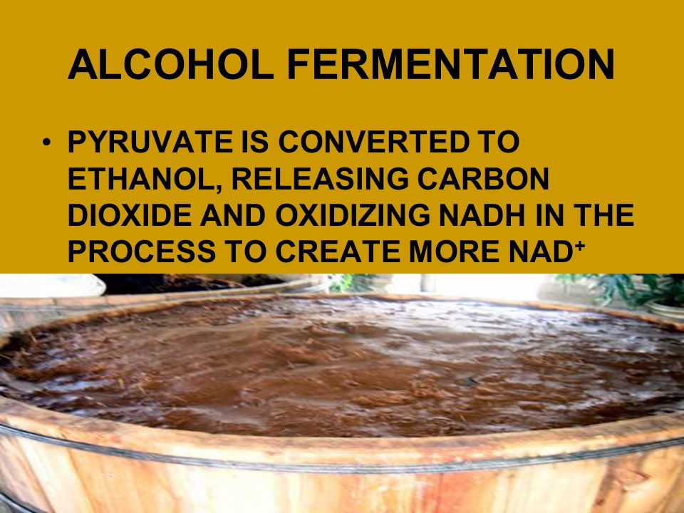 ALCOHOL FERMENTATION PYRUVATE IS CONVERTED TO ETHANOL, RELEASING CARBON DIOXIDE AND OXIDIZING NADH IN THE PROCESS TO CREATE MORE NAD+