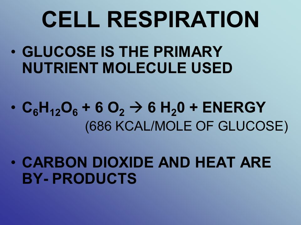 CELL RESPIRATION GLUCOSE IS THE PRIMARY NUTRIENT MOLECULE USED