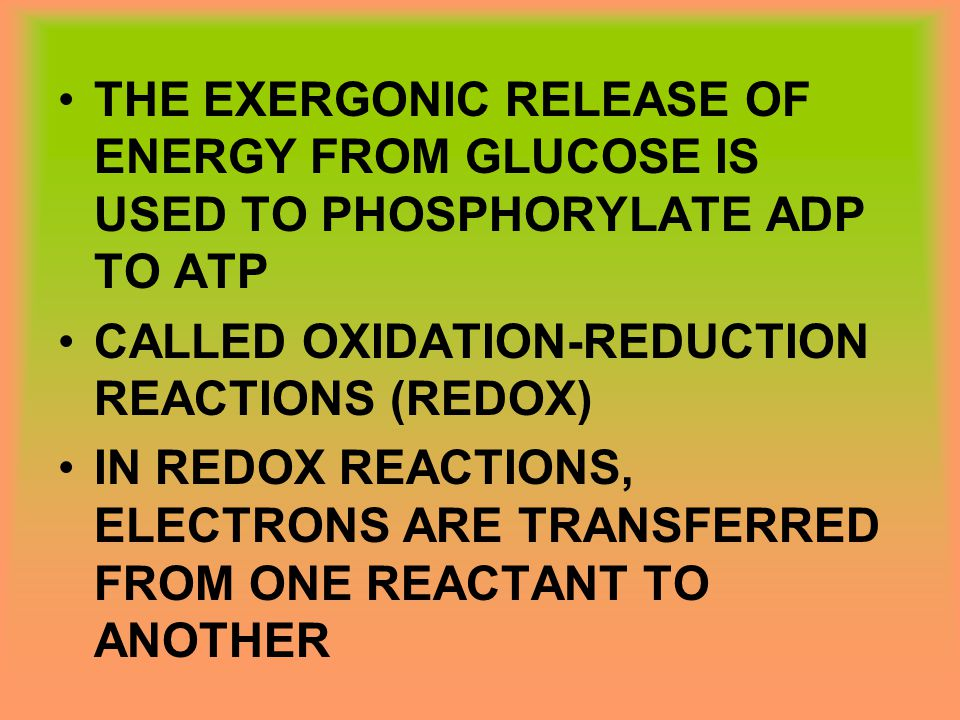 THE EXERGONIC RELEASE OF ENERGY FROM GLUCOSE IS USED TO PHOSPHORYLATE ADP TO ATP