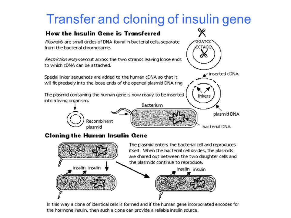 Transfer and cloning of insulin gene