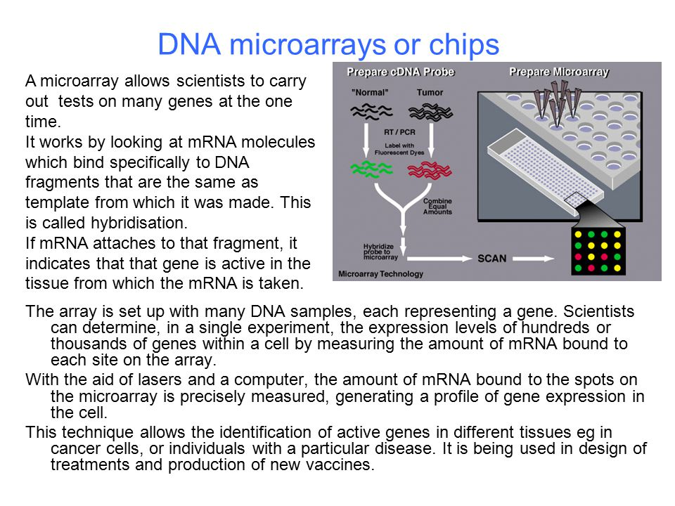 DNA microarrays or chips