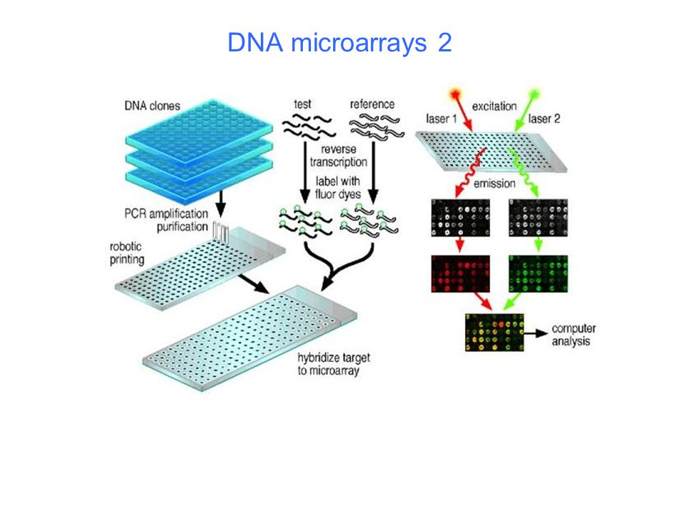 DNA microarrays 2