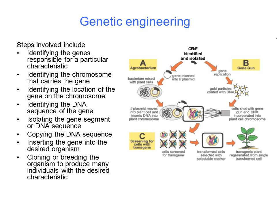 Genetic engineering Steps involved include