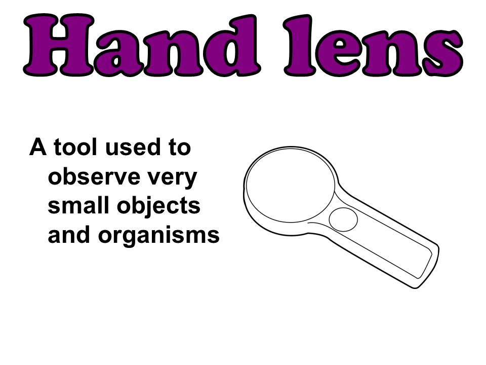 Hand lens A tool used to observe very small objects and organisms