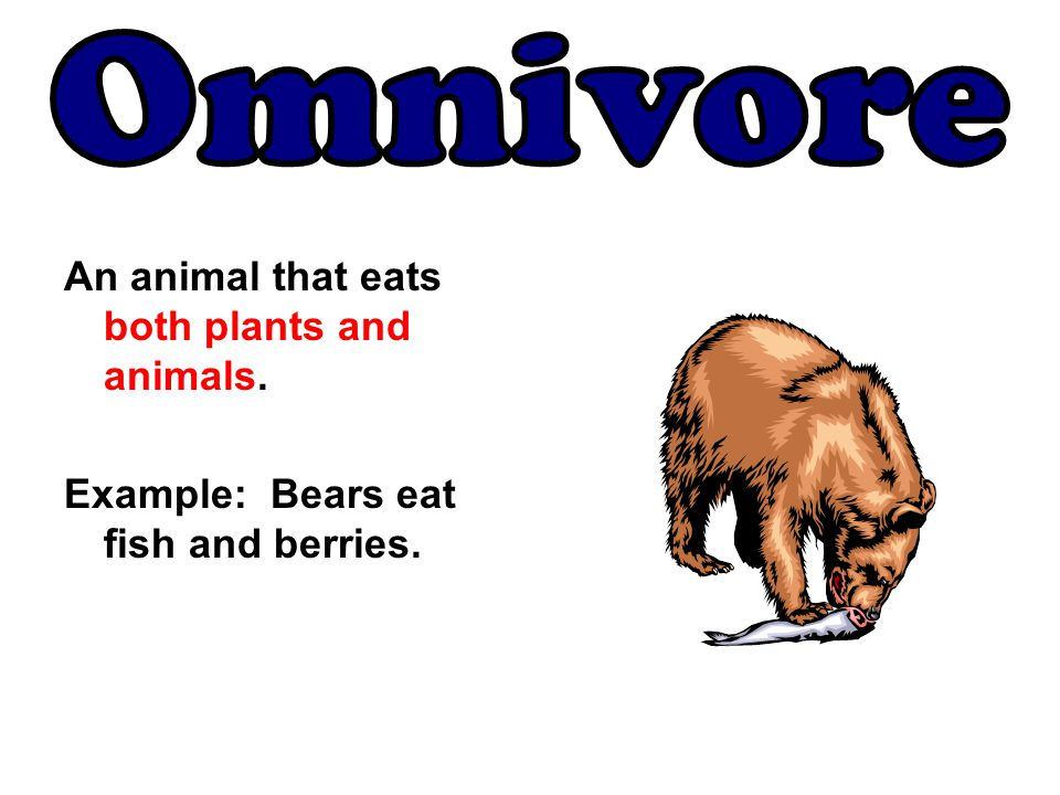 Omnivore An animal that eats both plants and animals.