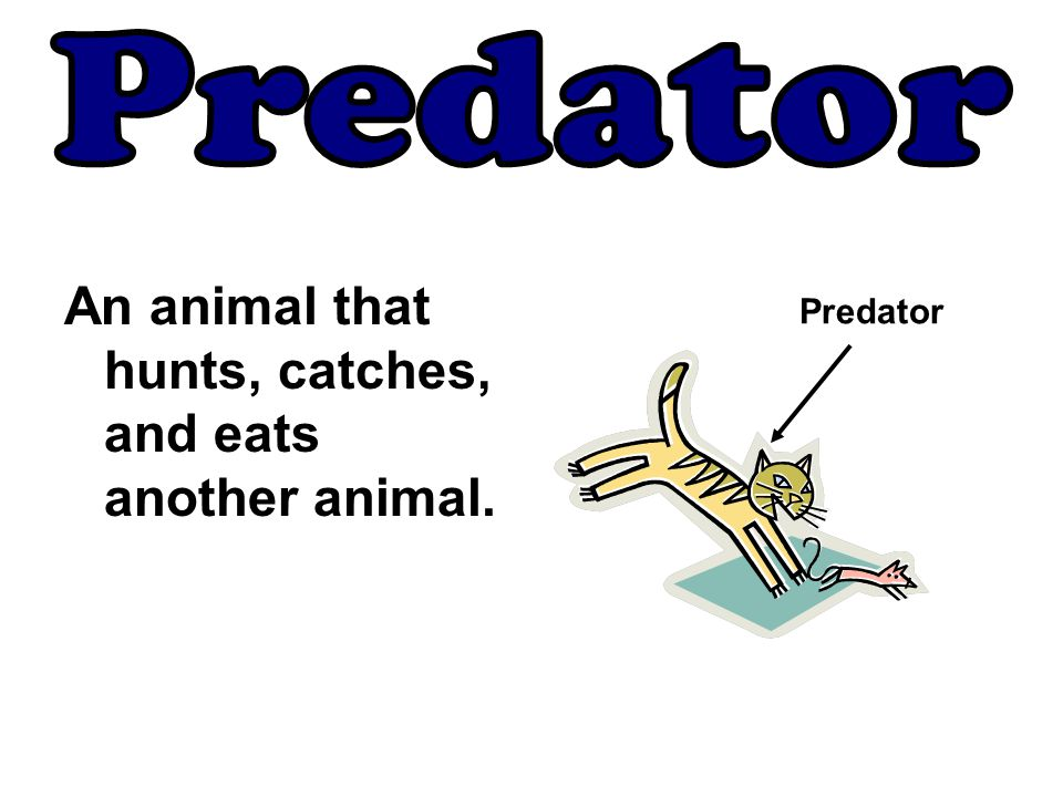 Predator An animal that hunts, catches, and eats another animal.