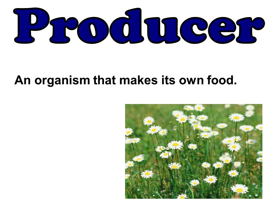 Producer An organism that makes its own food.
