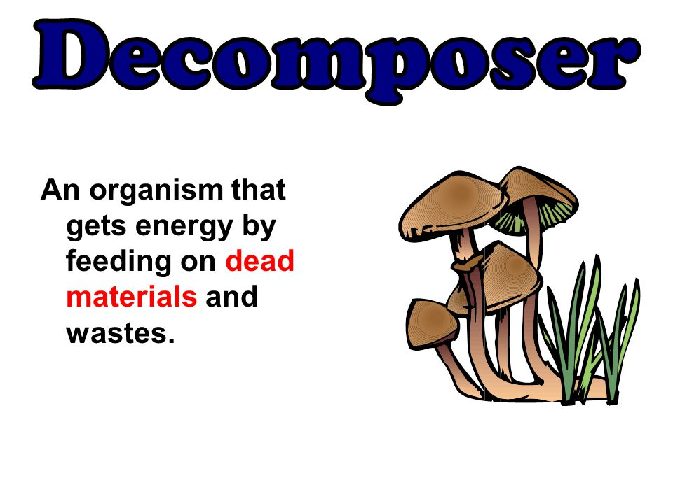 Decomposer An organism that gets energy by feeding on dead materials and wastes.