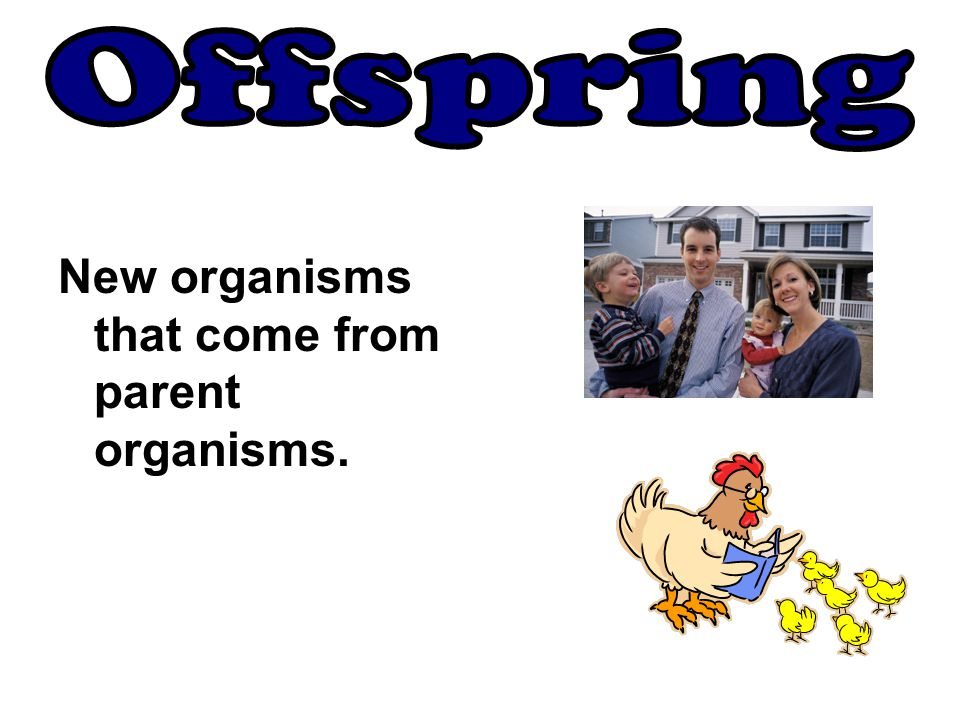 Offspring New organisms that come from parent organisms.