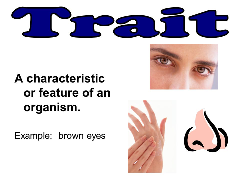 Trait A characteristic or feature of an organism. Example: brown eyes