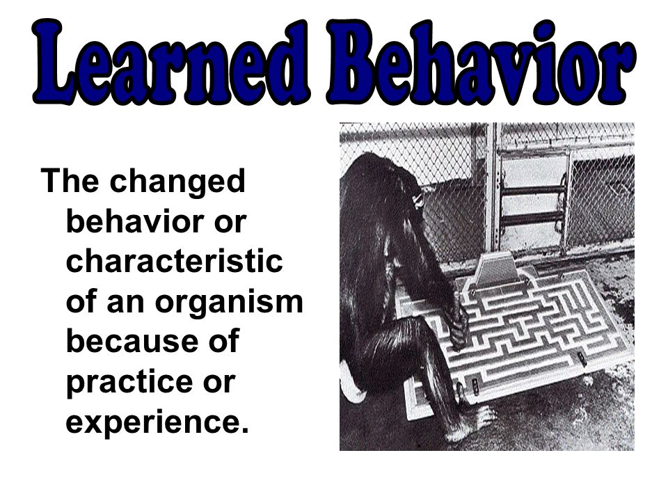 Learned Behavior The changed behavior or characteristic of an organism because of practice or experience.