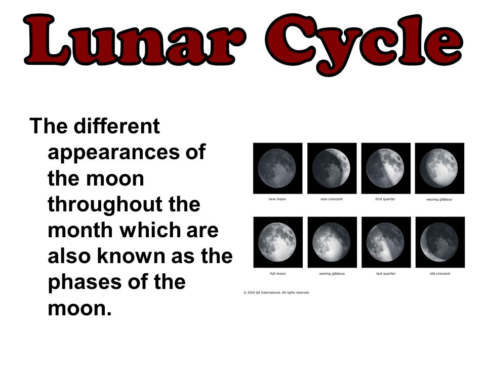 Lunar Cycle The different appearances of the moon throughout the month which are also known as the phases of the moon.
