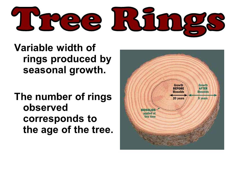 Tree Rings Variable width of rings produced by seasonal growth.