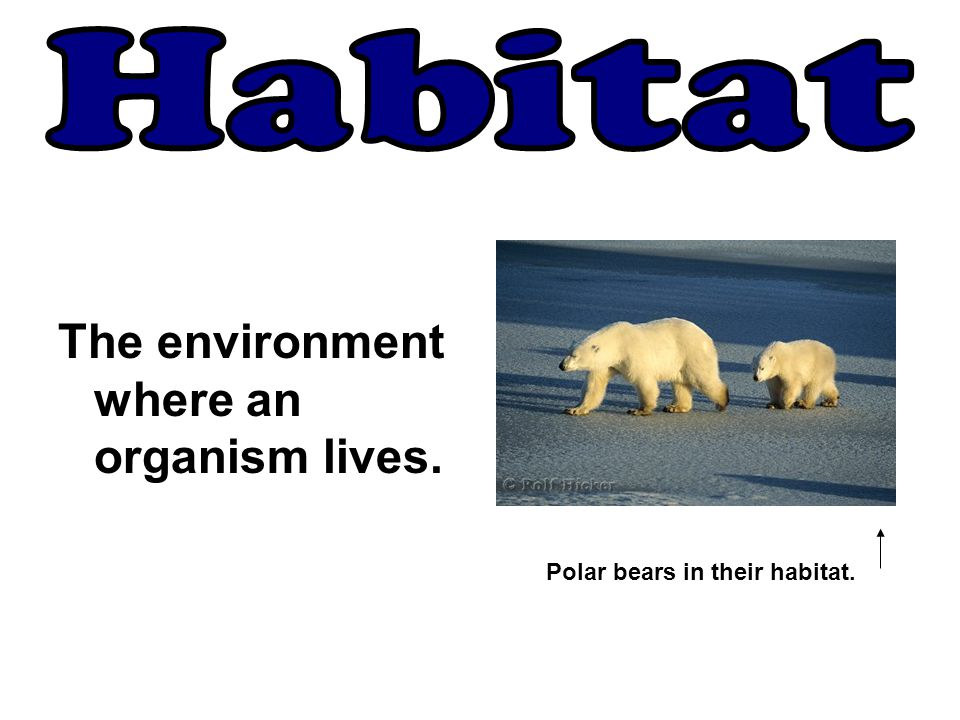 Habitat The environment where an organism lives.