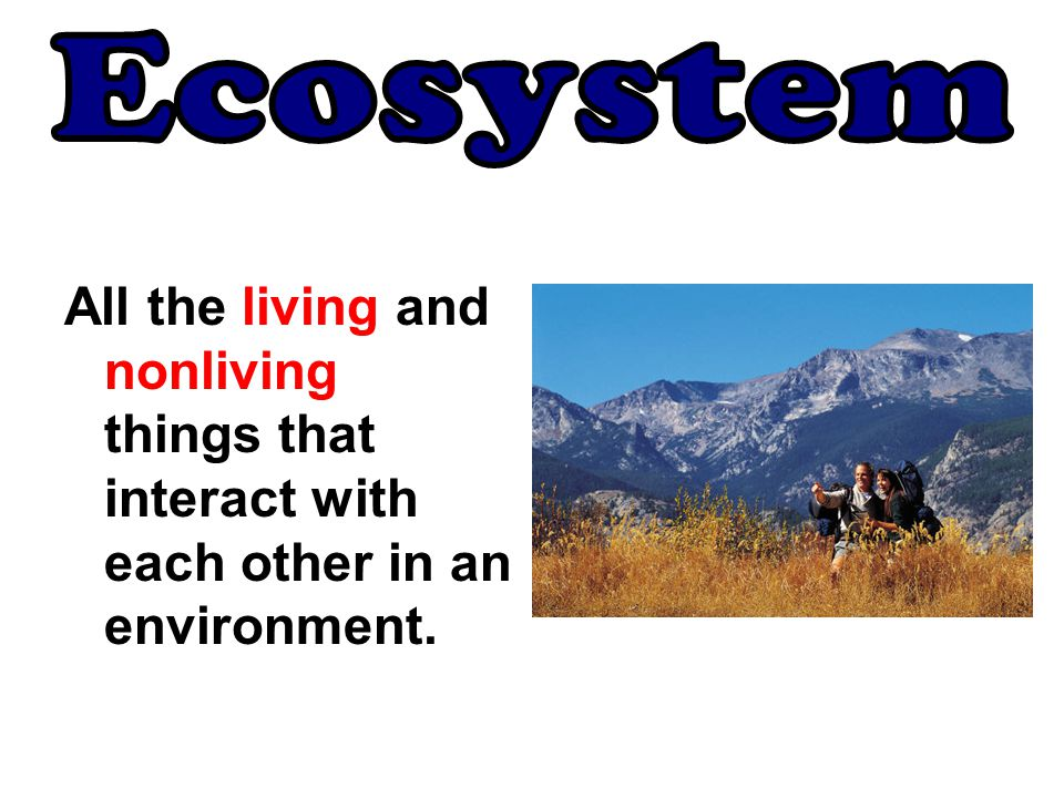 Ecosystem All the living and nonliving things that interact with each other in an environment.